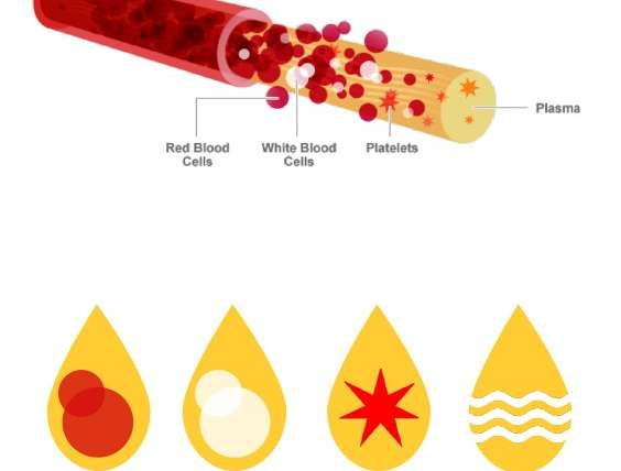 Hair Loss and Hair Thinning Treatment with Platelet-Rich Plasma (PRP)